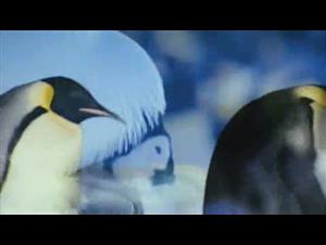 arctic-tale Video Thumbnail