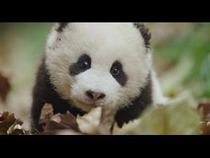 born-in-china-earth-day-trailer Video Thumbnail