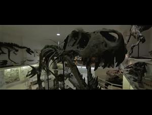 dinosaur-13 Video Thumbnail
