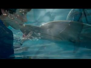 dolphin-tale-2 Video Thumbnail