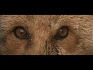 grey-owl Video Thumbnail