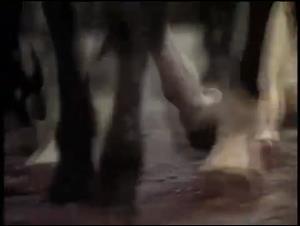 hoofbeats Video Thumbnail