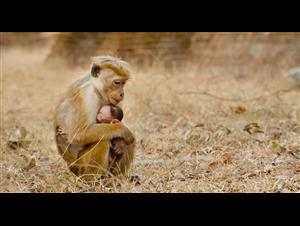 monkey-kingdom Video Thumbnail
