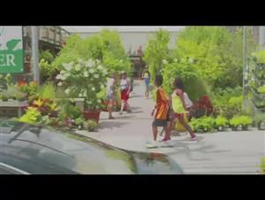 red-hook-summer Video Thumbnail