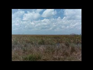 river-of-grass Video Thumbnail
