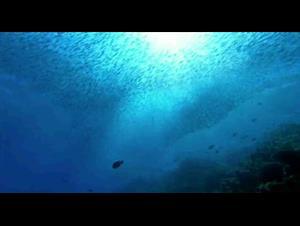 sharkwater Video Thumbnail