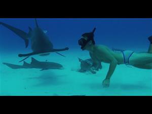 sharkwater-extinction-live-stream-announcement Video Thumbnail