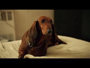 wiener-dog-official-trailer Video Thumbnail