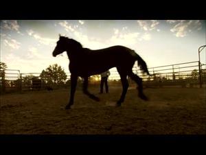 wild-horse-wild-ride Video Thumbnail