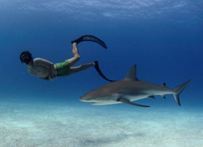 Rob Stewart in Sharkwater