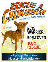 <em>Beverly Hills Chihuahua</em> stars make plea to public