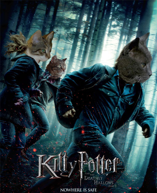 Cats take over top movie posters , Celebrity Gossip and