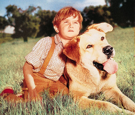 An unattractive stray dog wanders onto a farm and wins the hearts of the farm family's sons, Arliss and Travis (Tommy Kirk), but when Old Yeller shows his heroic qualities, a tragedy occurs.