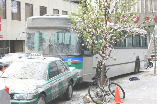 A taxi and bus are covered in rubble, while a cherry blossom stands untainted. Photo by Sue Holland.