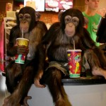 Chimps attend Planet of the Apes screening