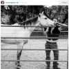 Channing Tatum rescues horse who loves beer