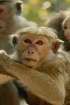 Monkey Kingdom - monkey around with these beautiful creatures