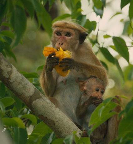 monkeykingdom2
