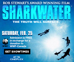 Rob Stewart's award-winning Sharkwater