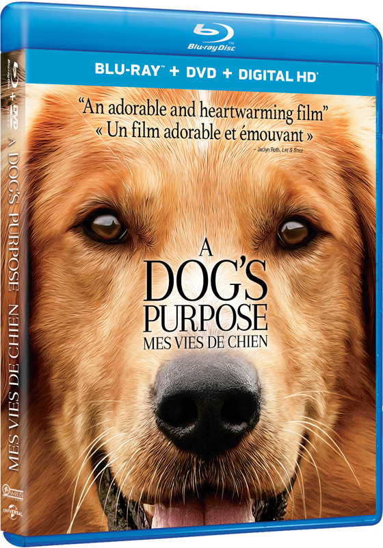 A Dog S Purpose Dvd