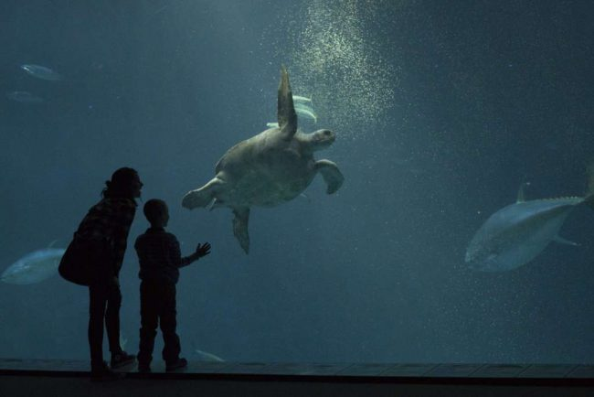 One of the locations used for filming was the Monterey Bay Aquarium, where Jane took Ziggy to see the turtles and other sea creatures.