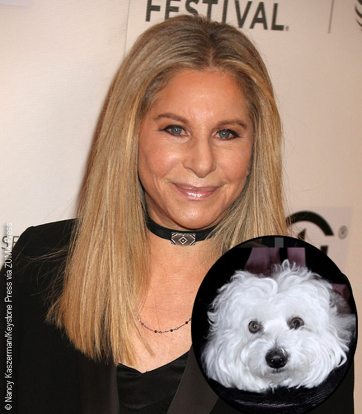 Barbara Streisand with Samantha (inset)