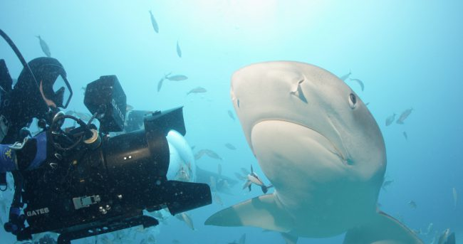Sharkwater opened people's eyes to what was happening to sharks. These majestic creatures were being slaughtered by the millions each year, and Rob knew if he didn't find a way to stop it, they would soon become extinct. Since the release of Sharkwater, 12 million square miles of the oceans have been made shark sanctuaries.