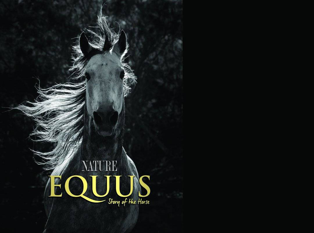 Equus: Story of the Horse wins Rob Stewart Award