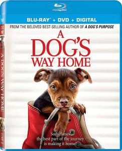 A Dog's Way Home on Blu-ray and DVD