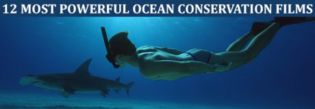 12 Most Powerful Ocean Films