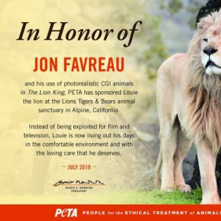 Rescued lion sponsored in honor of Jon Favreau