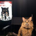 Meet Pet Sematary trainer Melissa Millett and star cat Tonic