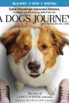 New on DVD - A Dog's Journey, The Hustle and more!