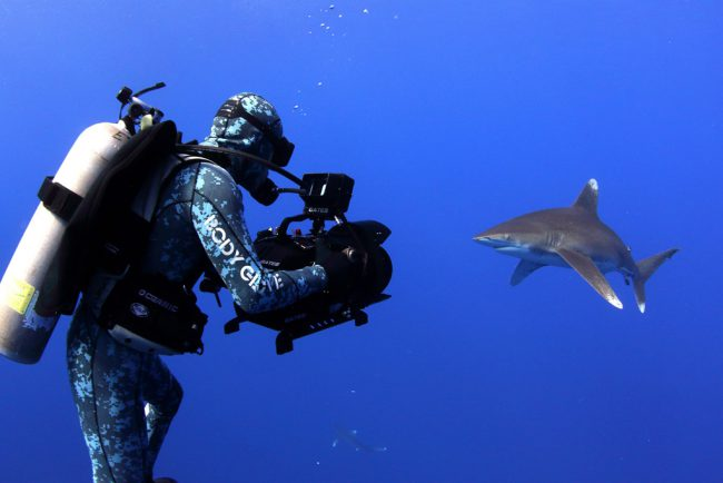 In 2019, the Rob Stewart Sharkwater Foundation was formed to continue his mission. All proceeds go to ocean conservation through raising awareness, education and entertainment. The Foundation launched the SharkFree campaign to work with cosmetic and personal care product companies in an effort to remove shark liver oil, known as squalene, from their products.