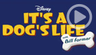 It's a Dog's Life (Disney+)