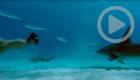 Sharkwater Extinction (Crave)
