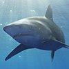 Great films to watch for Shark Awareness Week!