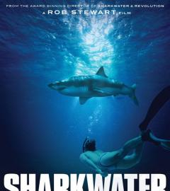 Rob Stewart's Sharkwater Extinction to premiere at TIFF!