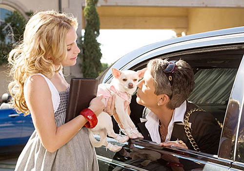 http://www.tribute.ca/tribute_objects/images/movies/Beverly%20Hills%20Chihuahua/beverly_hills_chihuahua2.jpg