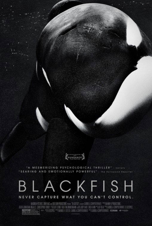 Blackfish Large Poster
