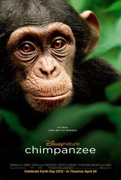 Chimpanzee Large Poster