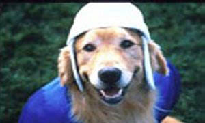 Air Bud: Golden Receiver Photo 2 - Large