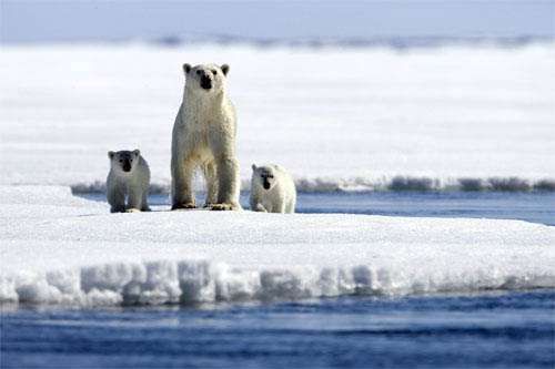 Arctic Tale Photo 1 - Large