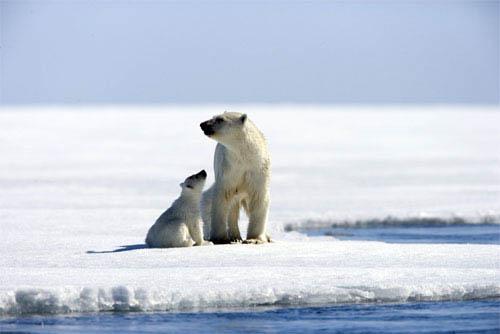 Arctic Tale Photo 2 - Large