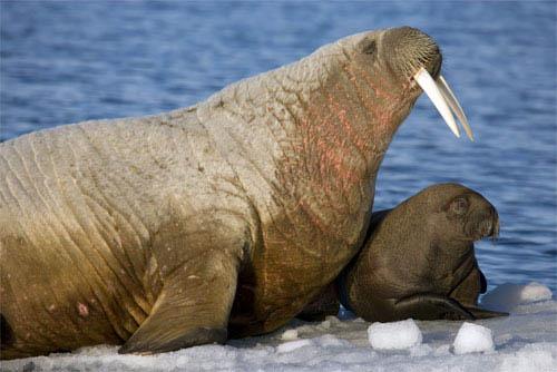 Arctic Tale Photo 3 - Large