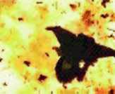 Armageddon Photo 12 - Large