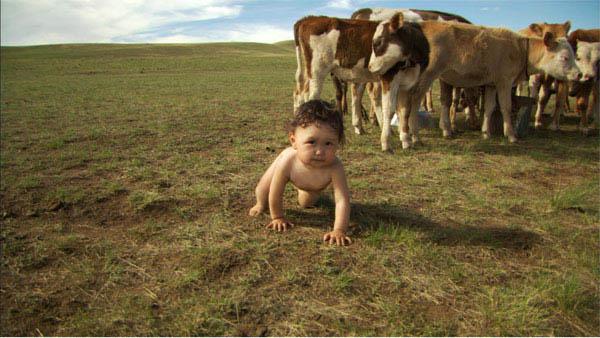 Babies Photo 8 - Large