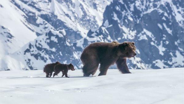 Bears Photo 3 - Large