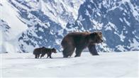 Bears Photo 3