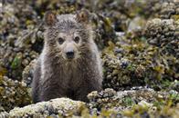Bears Photo 5